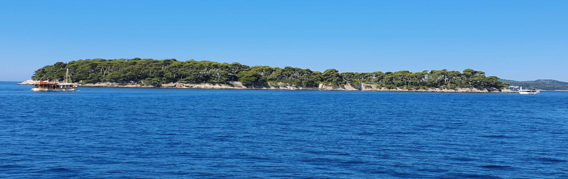 Exploring tree Elaphite islands
